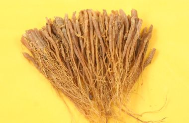 levný ženšen pravý - Panax ginseng